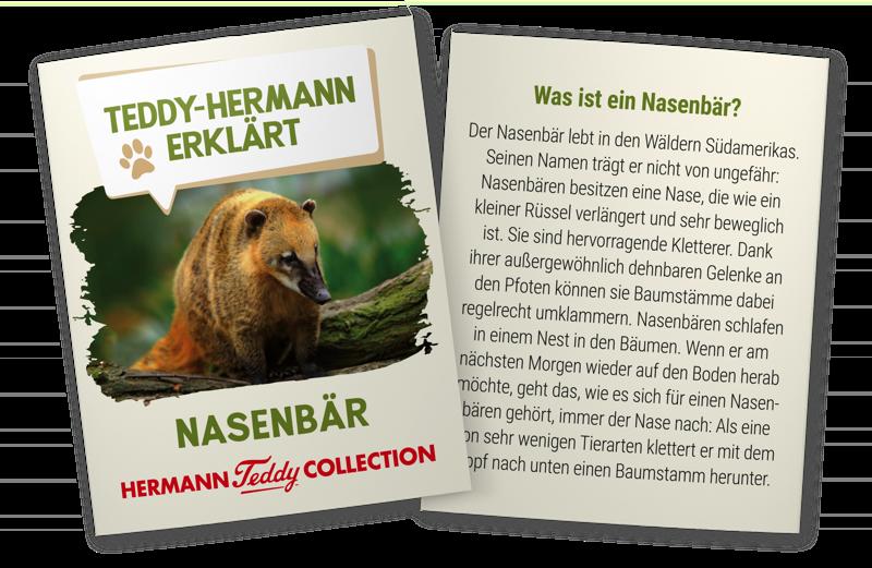 Teddy Hermann erklärt Nasenbär